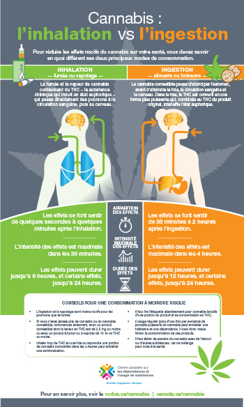 Cannabis : l'inhalation vs l'ingestion [infographie]